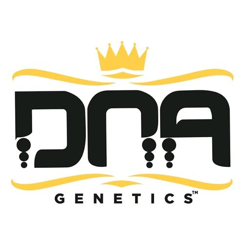 DNA GENETICS - CHOCOLOPE KUSH FEMINIZED - 6 SEEDS